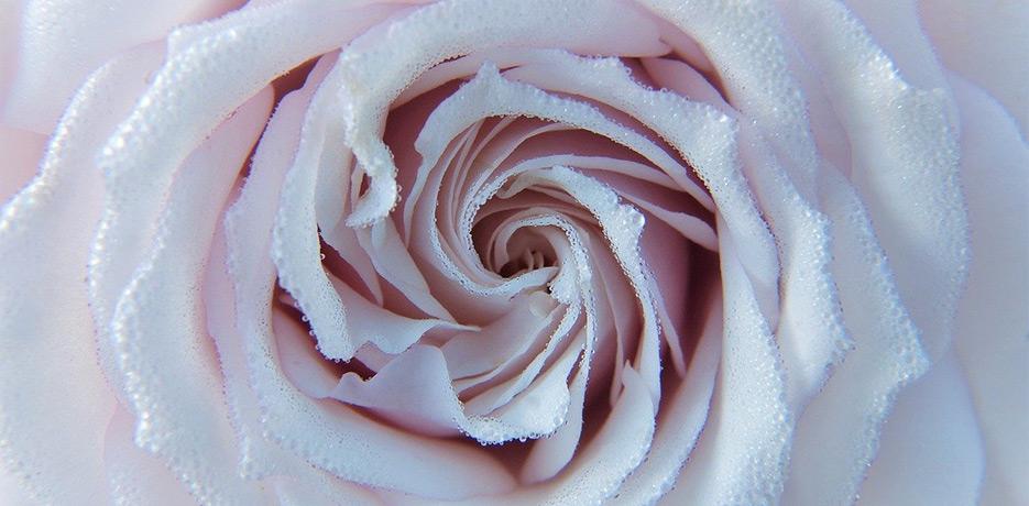 Craniosacral - rose